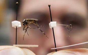 Et maintenant voilà les moustiques géants !