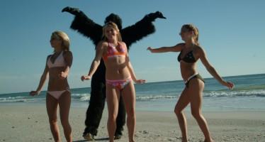 Un skunk ape filmé en Floride