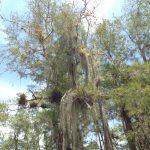 Loop Road -Everglades - Floride