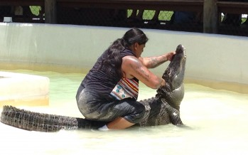 Everglades : l'indien Rocky Jim mordu par son alligator