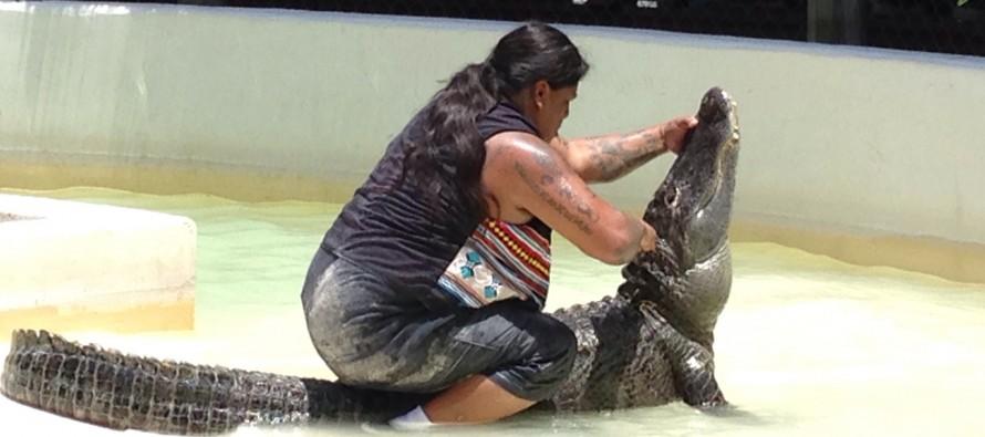Everglades : l'indien Rocky Jim mordu par son alligator