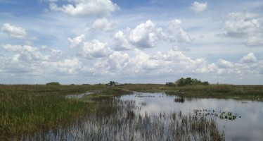 Les Everglades entre Miami et Naples (Tamiami Trail – US41) : indiens et alligators