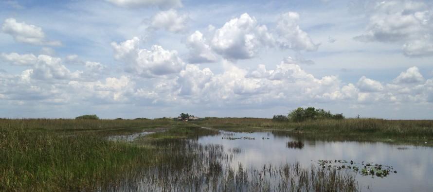 Les Everglades entre Miami et Naples (Tamiami Trail – US41) : indiens et alligators