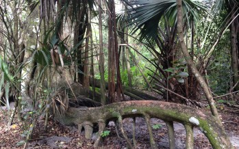 Secret Woods Nature Center – parc naturel à Dania Beach