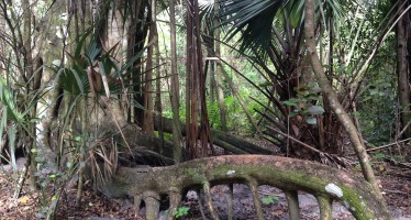 Secret Woods Nature Center – parc naturel à Fort Lauderdale