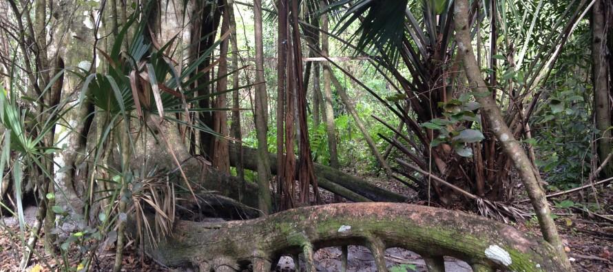 Secret Woods Nature Center – parc naturel à Dania Beach