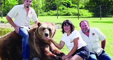 13 ours domestiques de 400 kilos dans le jardin