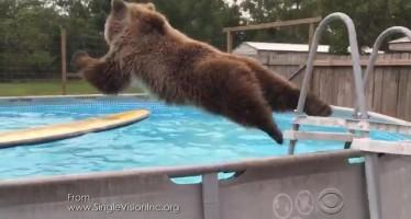 Un ours s'amuse à faire des plats dans une piscine de Floride