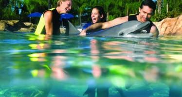 Un concert pour les dauphins à Palm Beach le 4 décembre