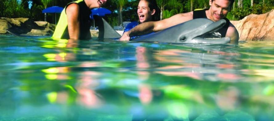 Voir et nager avec les dauphins en Floride