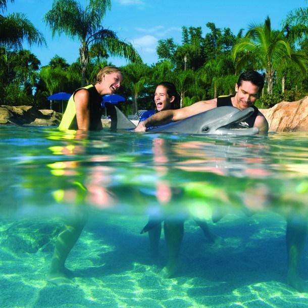 Nager Avec Les Dauphins En Floride Le Courrier De Floride