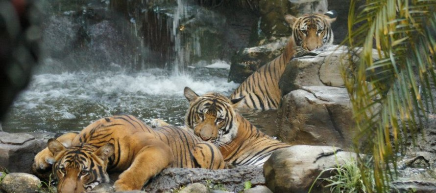 Le Zoo de Palm Beach : un must see en Floride !