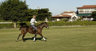Wellington en Floride : le cheval, ce roi