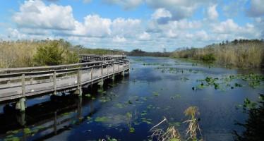 Visiter le Sud des Everglades (entre Florida City et Flamingo)