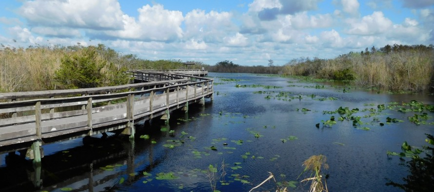 Visiter le Sud des Everglades (entre Florida City et Flamingo) : le Parc National des Everglades