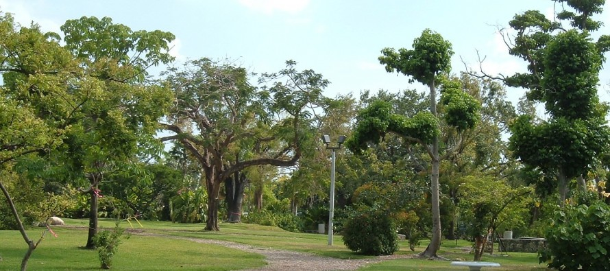 Le Guifford Arboretum (flore tropicale à Miami)