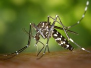 Virus Zika en Floride : un premier cas de microcéphalie