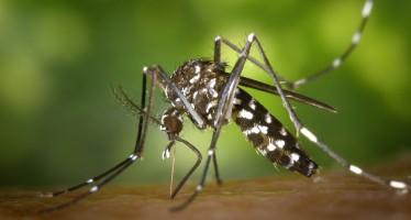 Doit-on avoir peur du virus ZIKA en Floride?