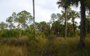 Marche, photo, et location d'un cottage au milieu des Everglades