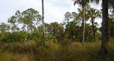 Marche, photo, et location d'un cottage au milieu des Everglades
