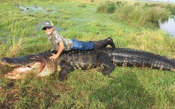 Un alligator géant abattu en Floride