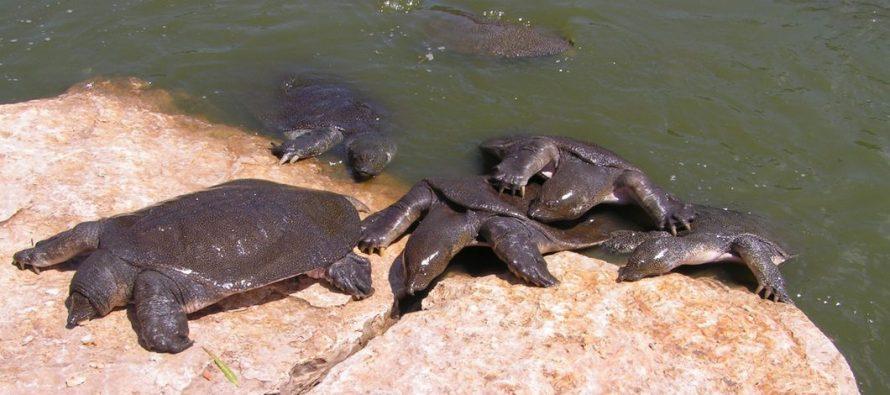 Condamné au Canada pour contrebande de tortues de Floride