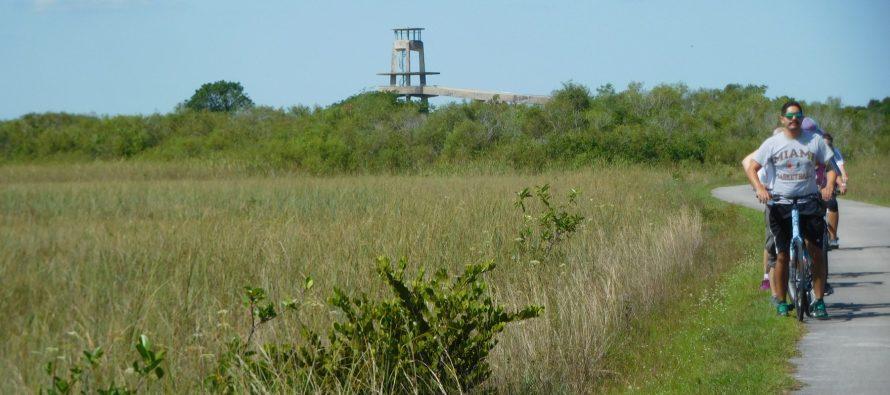 Shark Valley : découvrir les Everglades à vélo ou en tram