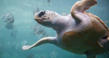 Une nuit sur une plage de Floride pour voir la marche des tortues de mer