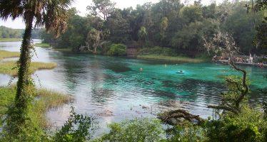Les sources du centre de la Floride : une excellente idée de weekend !