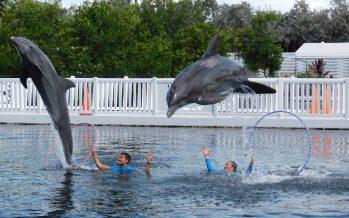 Theater of the Sea : le royaume des dauphins à Islamorada