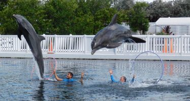 Theater of the Sea : le royaume des dauphins à Islamorada