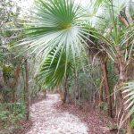 Parc d'Etat de Floride Windley Key Fossil Reef Geological / Islamorada