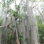 Parc d'Etat de Floride Windley Key Fossil Reef Geological
