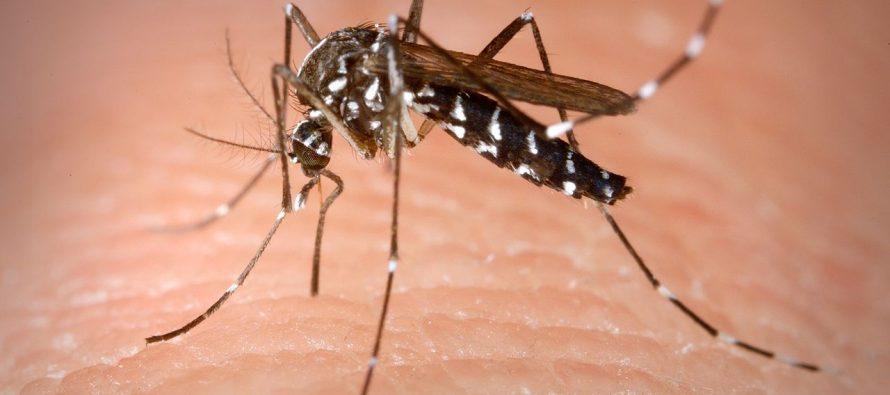 Le virus Zika poursuit son expansion en Floride