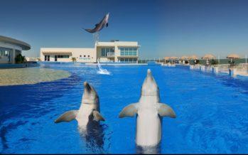 Marineland de St Augustine : les dauphins pour passion depuis 1938