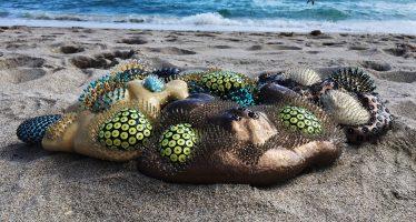 Les Arty' Coraux de Sharon Berebichez et La nouvelle foire Art Concept / Chronique Art in Miami