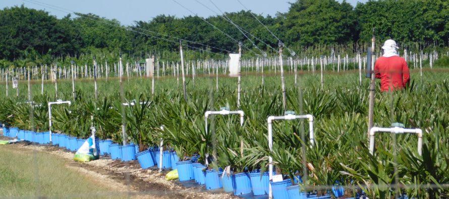 Miami : l'agriculture a un coup de blues