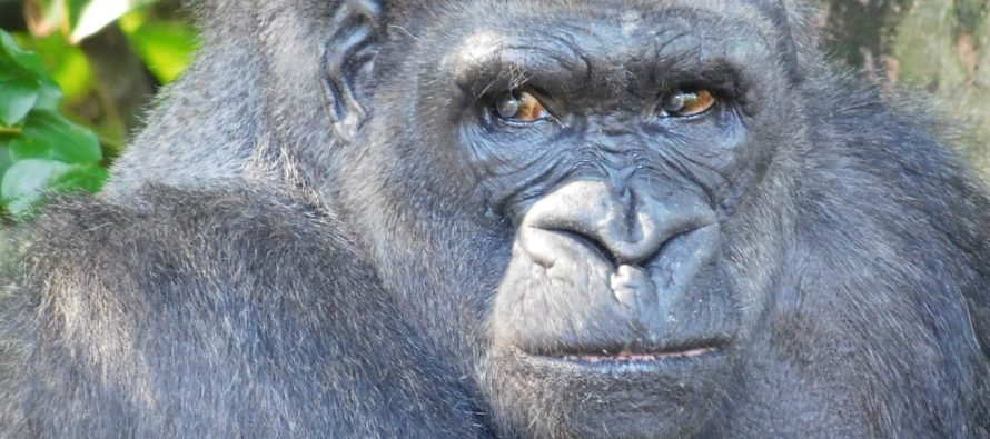 Monkey Jungle de Miami : les singes sont dehors, et vous dans la cage !