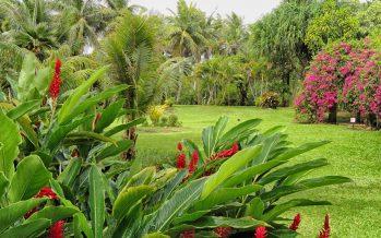 Un beau jardin de plantes et de fleurs tropicales en Floride !