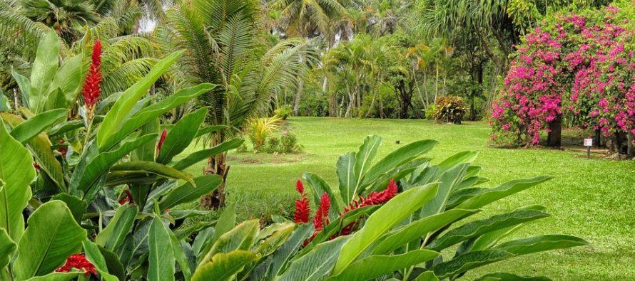 un beau jardin de plantes et de fleurs tropicales en. Black Bedroom Furniture Sets. Home Design Ideas