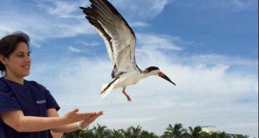 Pelican Harbor : un hôpital pour oiseaux sur une île de Miami Beach