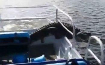 Floride : Un alligator saute dans le bateau des touristes (vidéo)