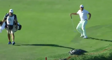 Les réactions des golfeurs face à l'alligator de Floride (vidéos)