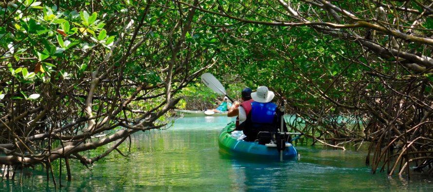Canoë et kayak en Floride : les plus beaux endroits pour en faire à Miami et ailleurs