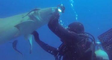 Floride : Un plongeur vient en aide à un requin à Jupiter (vidéo)