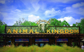 Visiter Disney's Animal Kingdom à Disney World Orlando