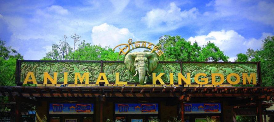 Visiter Disney's Animal Kingdom à Disney World Orlando