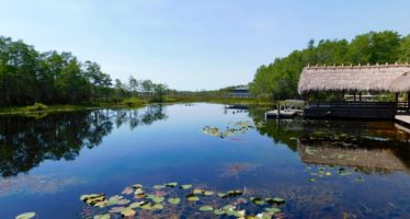 Grassy Waters Preserve : un joli parc des Everglades à West Palm Beach