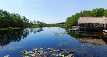 Grassy Waters Preserve : un joli parc des Everglades à West Palm Beach