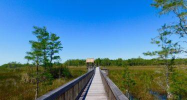 Visiter les Everglades : les 7 endroits à voir absolument dans les marais de Floride